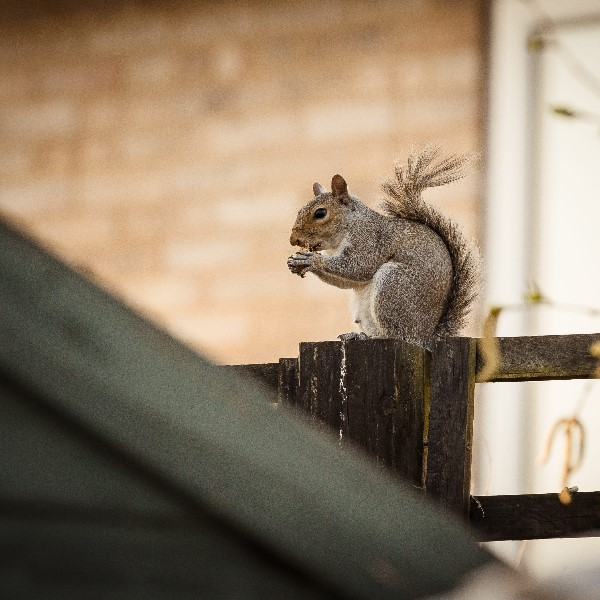Squirrel Pest Control Services in Maidstone
